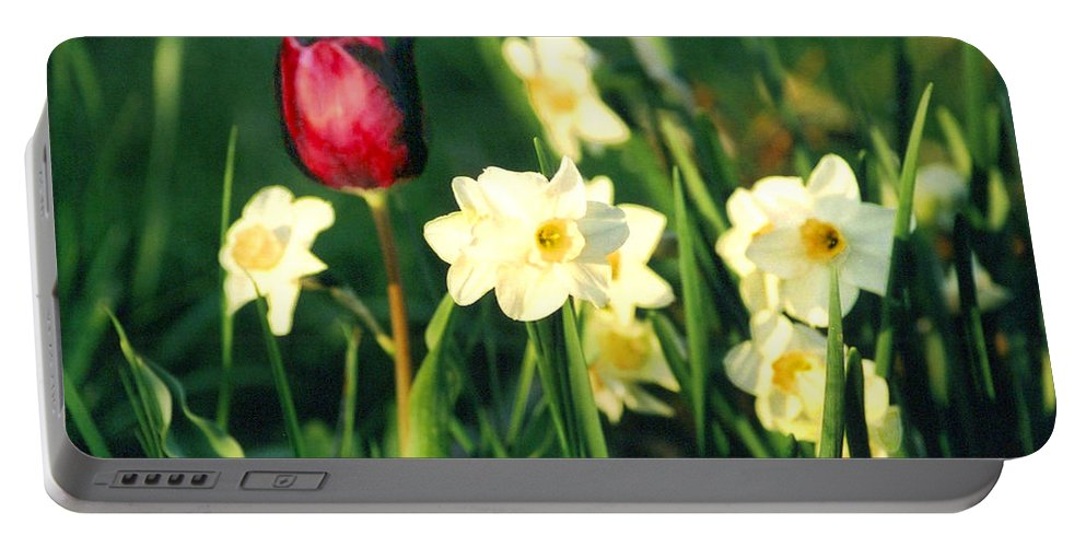 Tulips Portable Battery Charger featuring the photograph Royal Spring by Steve Karol