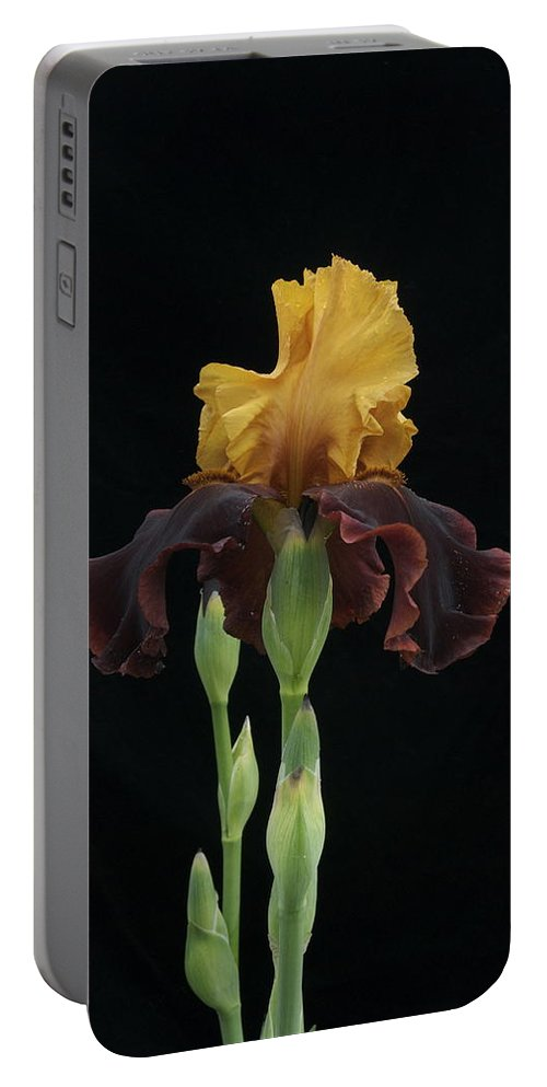 Iris Portable Battery Charger featuring the photograph Royalty by Michael Peychich