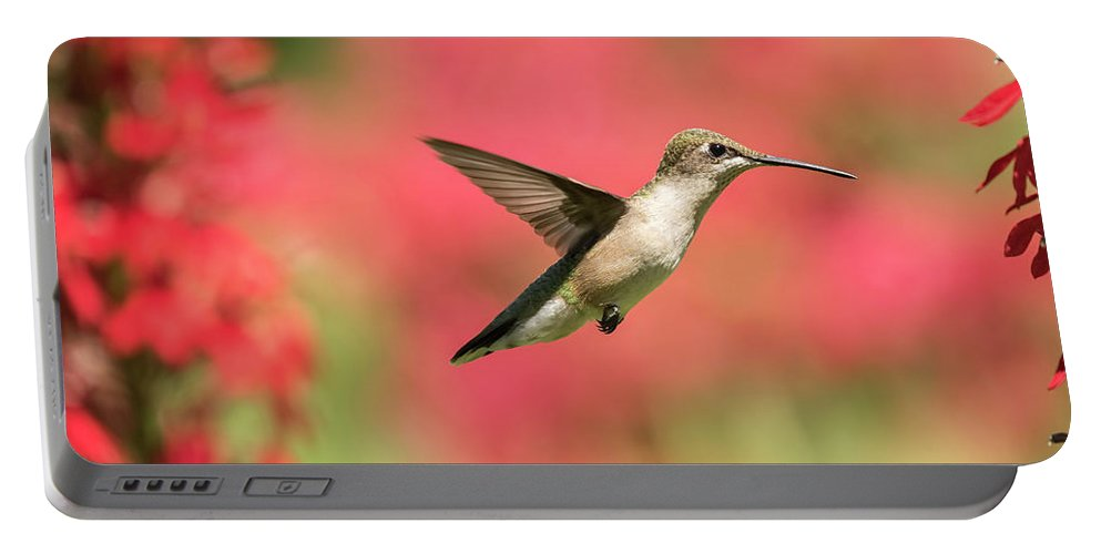 Ruby Throated Hummingbird Portable Battery Charger featuring the photograph Ruby Throated Hummingbird 2016-6 by Thomas Young