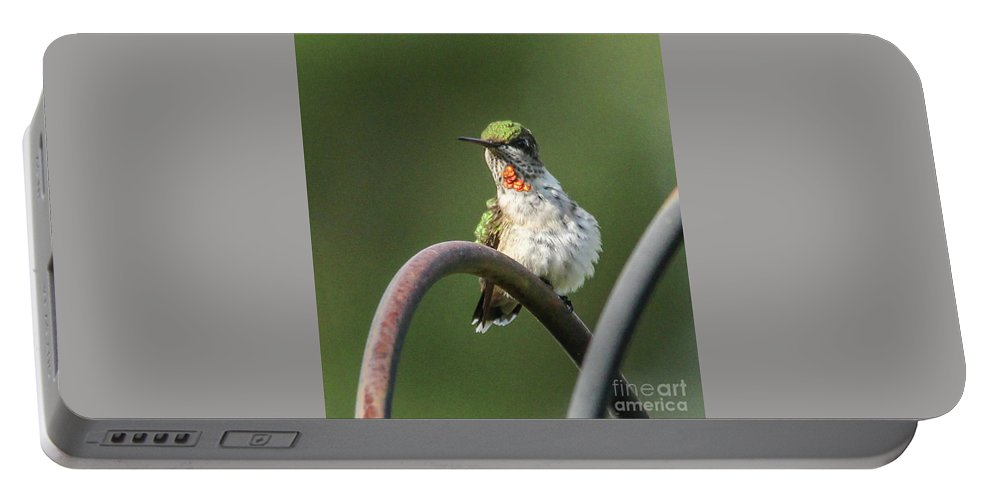 Green Bird Portable Battery Charger featuring the photograph Ruby-throated Hummingbird by Jo Anne Keasler