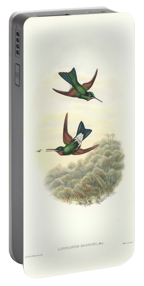Hummingbird Portable Battery Charger featuring the painting Rufous-webbed Brilliant Hummingbird Heliodoxa Branickii by John and Elizabeth Gould