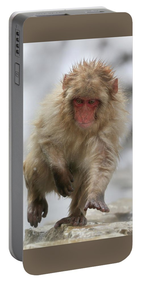 Snow Monkeys Portable Battery Charger featuring the photograph Running Fast by Leigh Lofgren