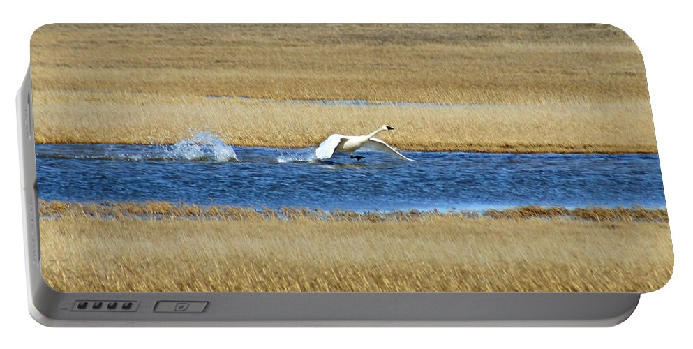 Swan Portable Battery Charger featuring the photograph Running On Water by Anthony Jones