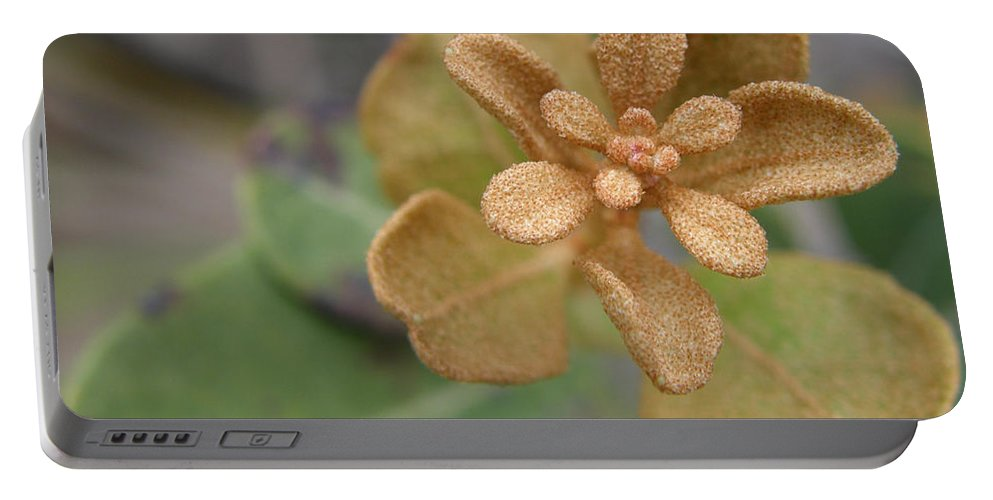 Plant Portable Battery Charger featuring the photograph Rusty Lyonia by Kimberly Mohlenhoff