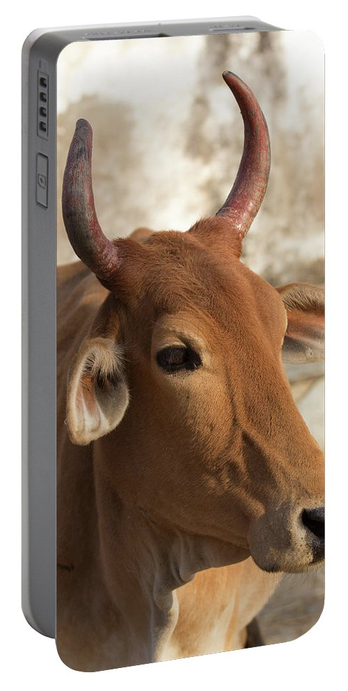Asia Portable Battery Charger featuring the photograph Sacred Cow by Emily M Wilson