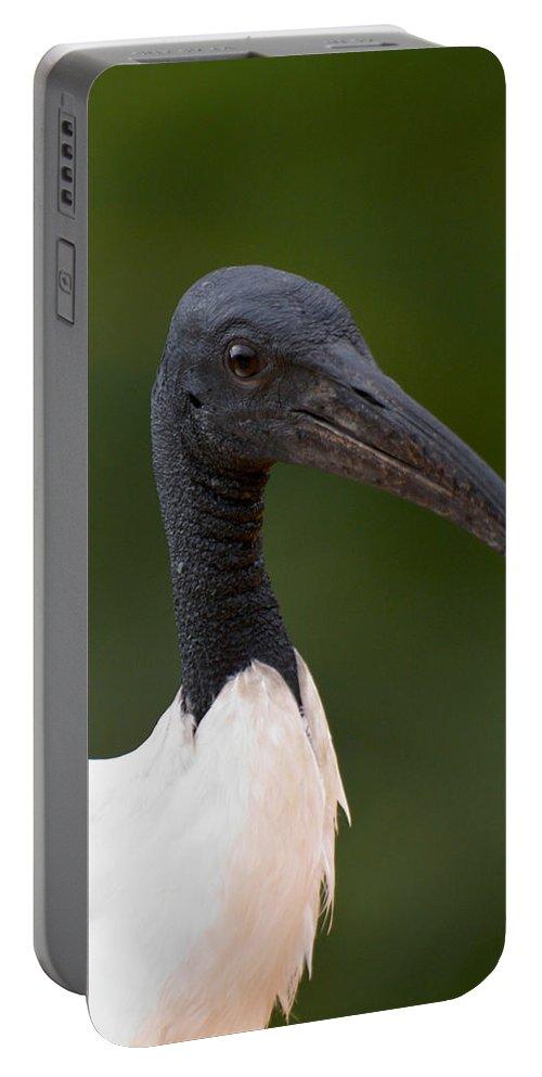 Lehtokukka Portable Battery Charger featuring the photograph Sacred Ibis by Jouko Lehto