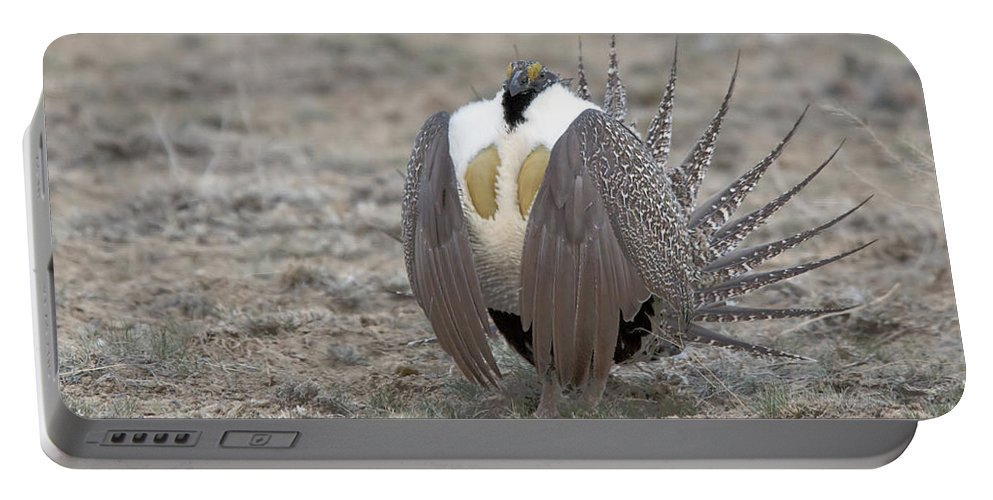 Grouse Portable Battery Charger featuring the photograph Sage Grouse by Gary Beeler