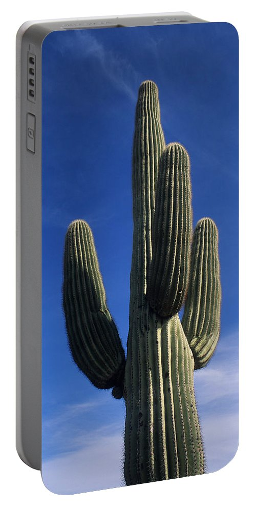 Saguaro Cactus Portable Battery Charger featuring the photograph Saguaro Cactus by Steve Williams