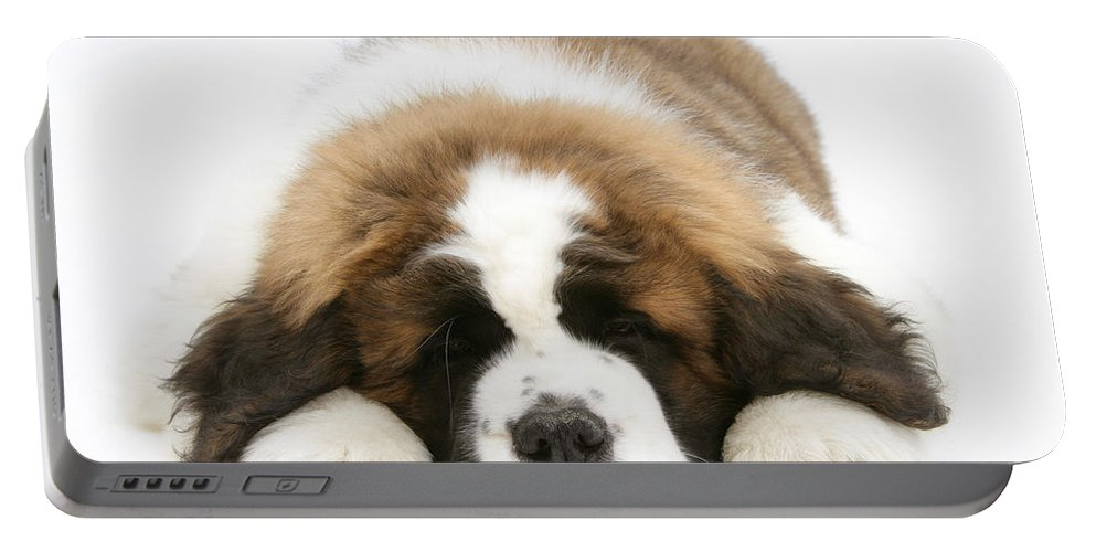 Animal Portable Battery Charger featuring the photograph Saint Bernard Puppy Sleeping by Mark Taylor