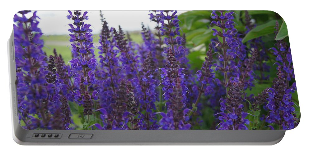 Purple Portable Battery Charger featuring the photograph Salvia In The Spring by Kristi Ulrich