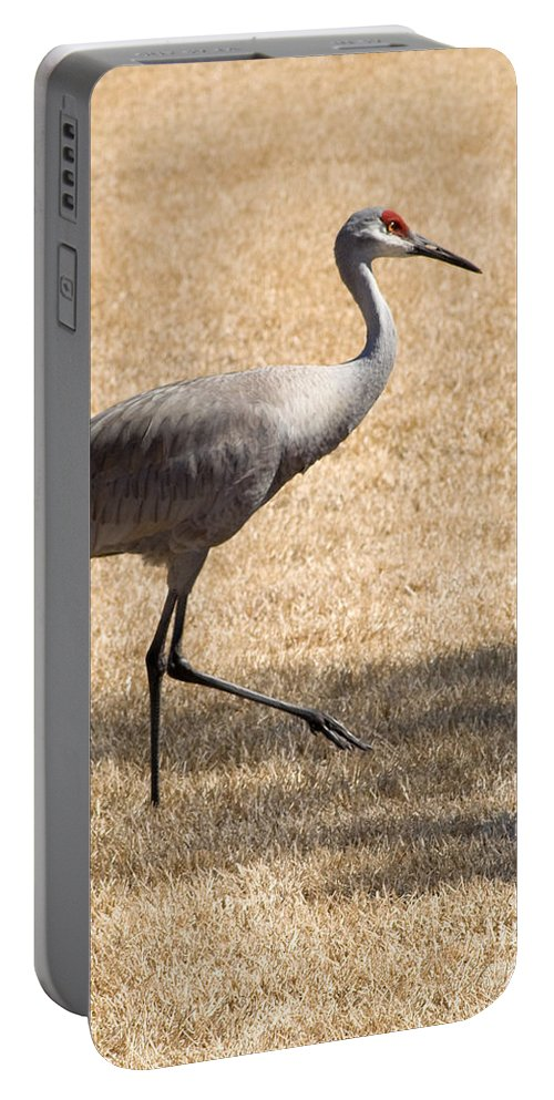 Crane Portable Battery Charger featuring the photograph Sand Hill Cranes by Thomas Marchessault