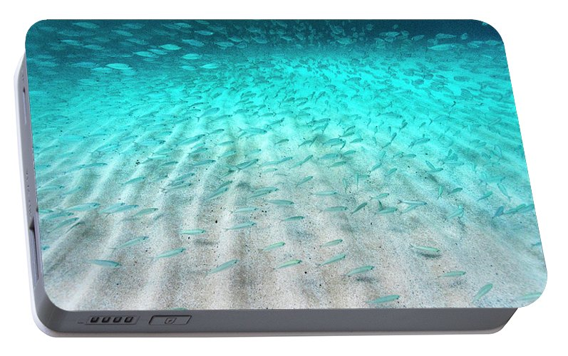 Underwater Portable Battery Charger featuring the photograph Sand Ripple Fish by Sean Davey
