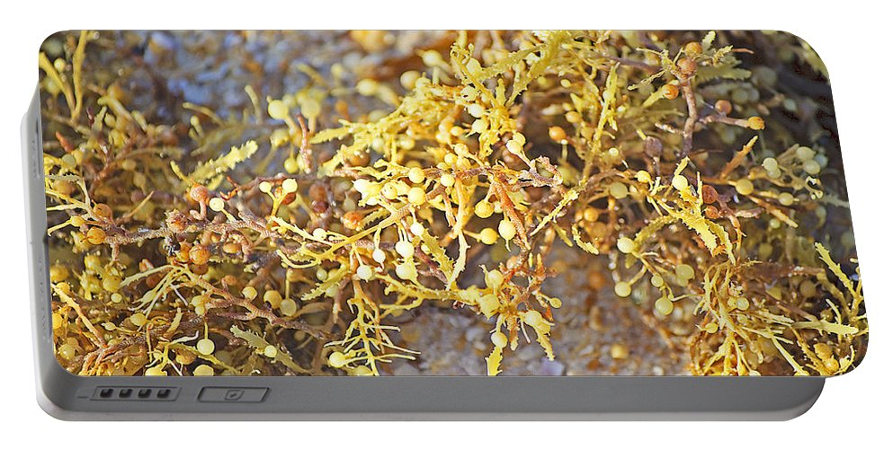 Seaweed Portable Battery Charger featuring the photograph Sargassum Seaweed by Kenneth Albin