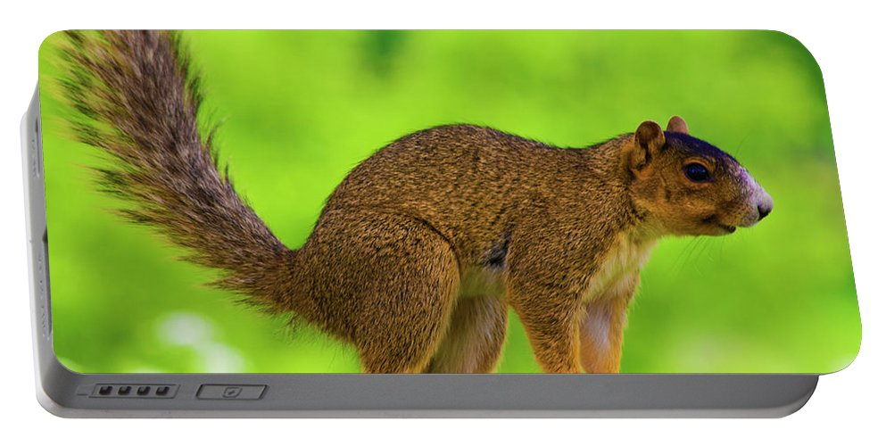 Fox Squirrel Portable Battery Charger featuring the photograph Sass by Betsy Knapp