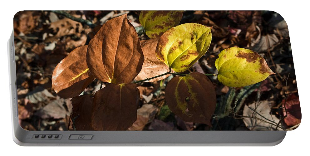 Sawbrier Portable Battery Charger featuring the photograph Sawbrier Or Greenbriar In The Fall by Douglas Barnett