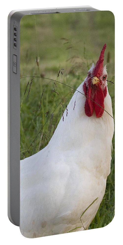 Rooster Farm Rural Chicken Bird White Red Curious Portable Battery Charger featuring the photograph Say What by Andrei Shliakhau