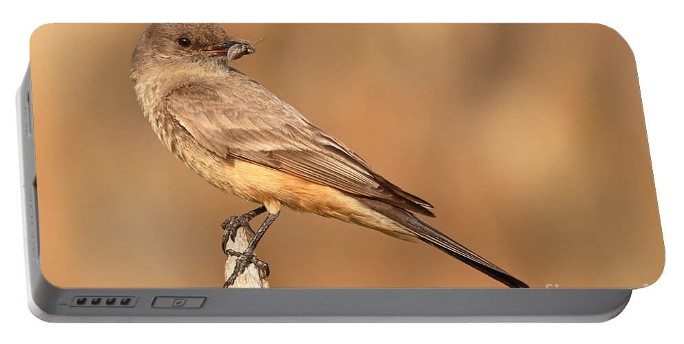 Say's Phoebe Portable Battery Charger featuring the photograph Say's Phoebe Looking Back With Insect Grasped In Beak by Max Allen