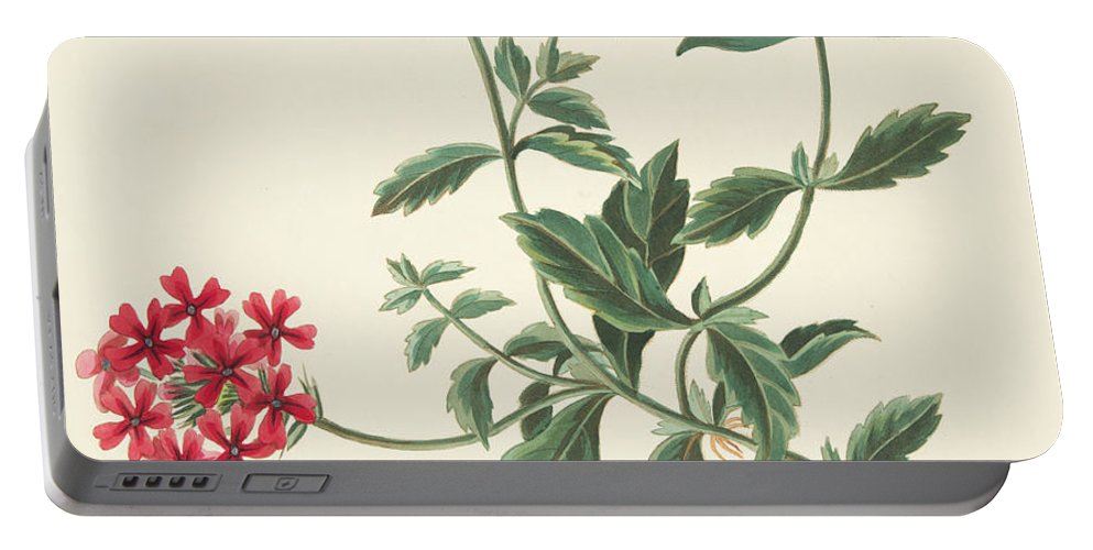 Red Portable Battery Charger featuring the drawing Scarlet Flowered Vervain by Margaret Roscoe