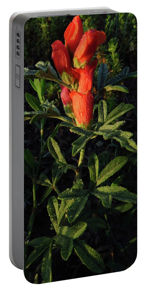 Scarlet Portable Battery Charger featuring the photograph Scarlet Globemallow by Michael Wheeler
