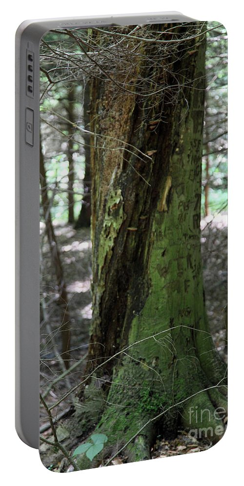 Tree Portable Battery Charger featuring the photograph Scarred by Amanda Barcon