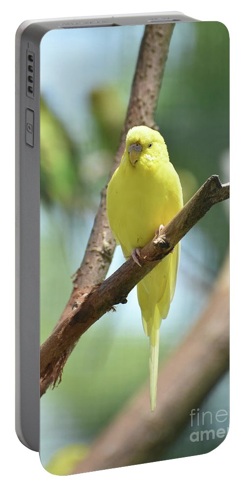 Budgie Portable Battery Charger featuring the photograph Scenic View Of An Adorable Yellow Parakeet by DejaVu Designs