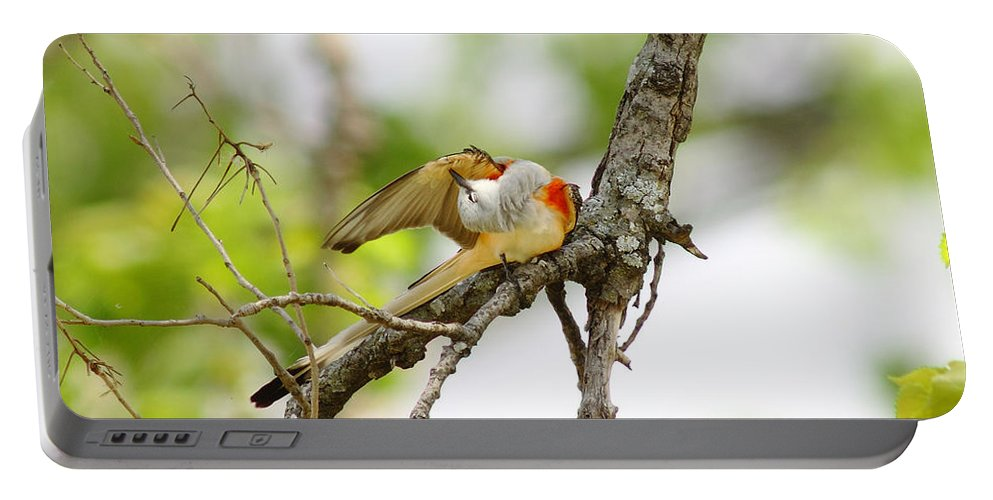 Animal Portable Battery Charger featuring the photograph Scissortail Ballet by Robert Frederick