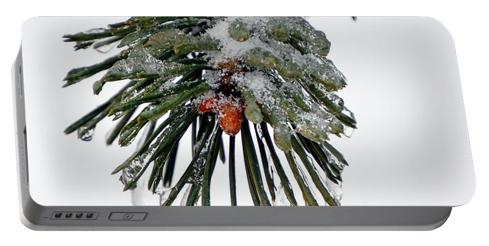Winter Portable Battery Charger featuring the photograph Scots Pine And Ice by Lisa Kane