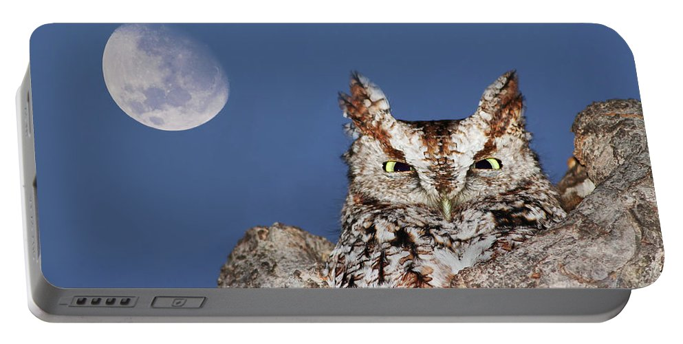 Asio Portable Battery Charger featuring the photograph Screech Owl by Mircea Costina Photography