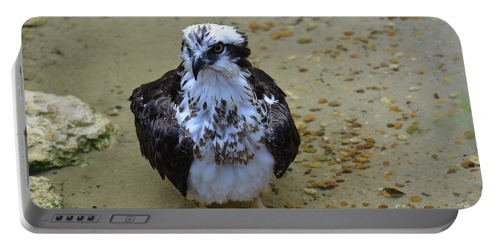 Bathing Portable Battery Charger featuring the photograph Sea Hawk Standing In Shallow Water by DejaVu Designs