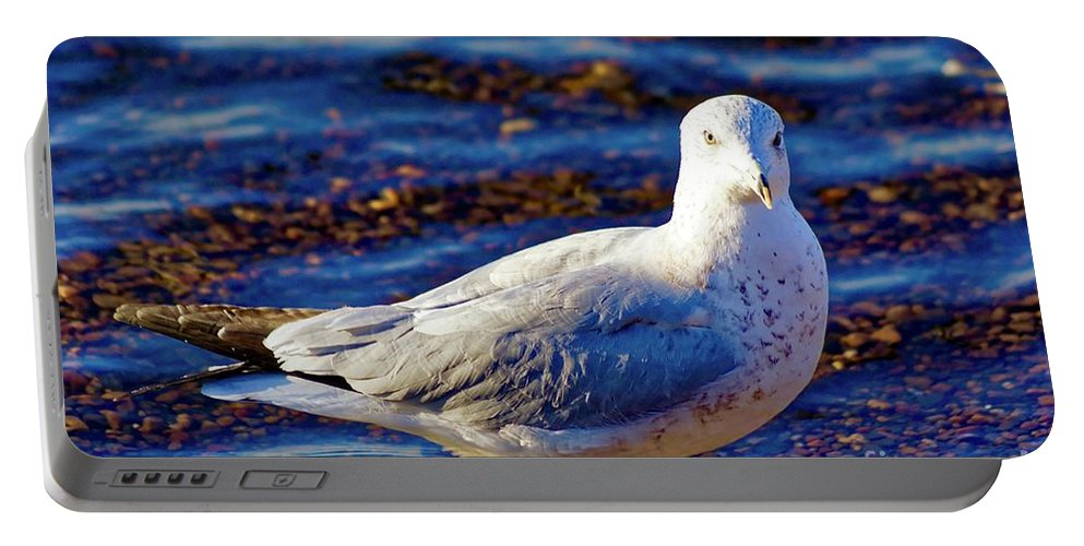 East Coast Portable Battery Charger featuring the photograph Seagull 1 by Jasmin Hrnjic