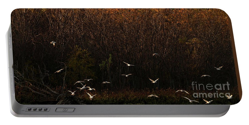 Fall Portable Battery Charger featuring the photograph Seagulls In Flight by Elizabeth Winter