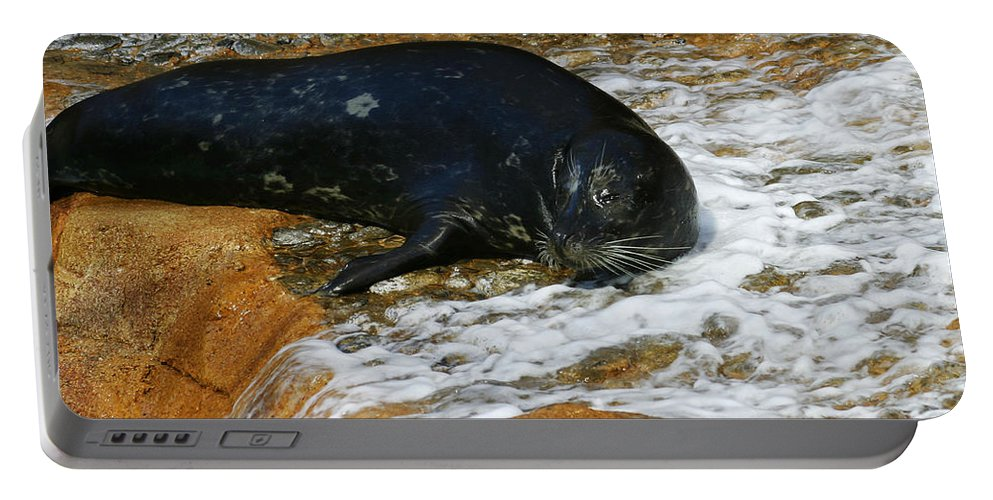 Seal Portable Battery Charger featuring the photograph Seal by Anthony Jones