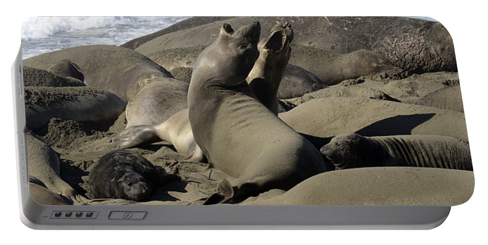 California Portable Battery Charger featuring the photograph Seal Duet by Bob Christopher