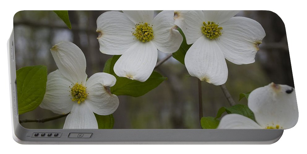 Flower Portable Battery Charger featuring the photograph Season Of Dogwood by Andrei Shliakhau