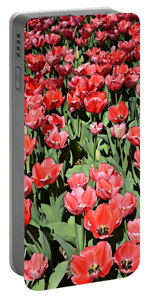 Seasons Portable Battery Charger featuring the photograph Seasonal Beauty by Ally White