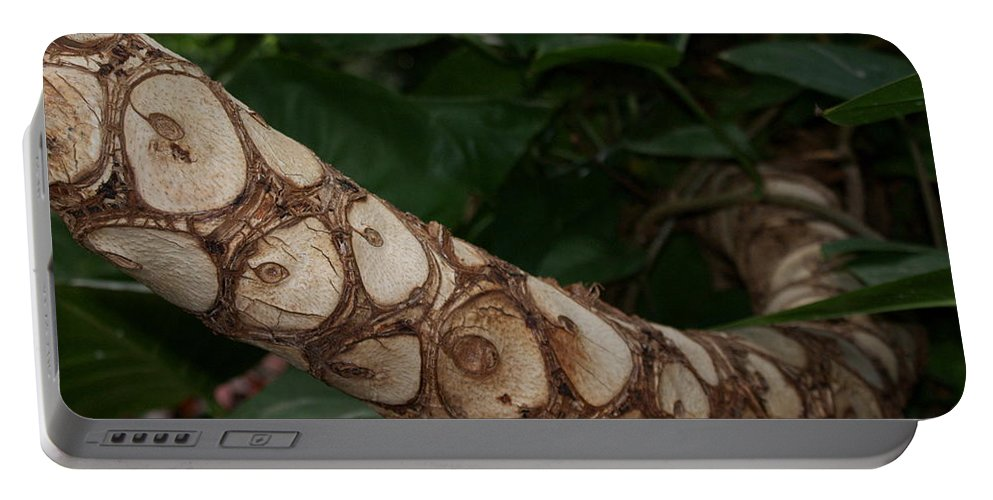 Snake Portable Battery Charger featuring the photograph Secrets Of The Jungle by Joanne Smoley