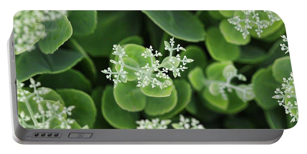 Sedum Plant Green Photography Photograph White Portable Battery Charger featuring the photograph Sedum Pre-bloom by Shari Jardina