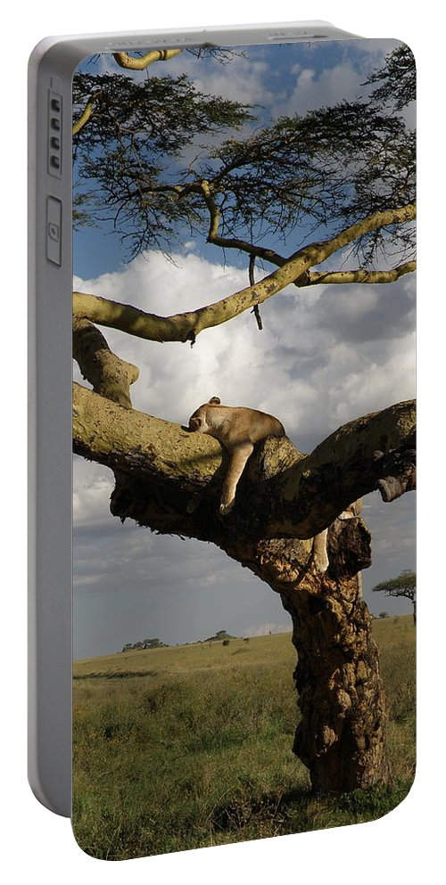 Nature Portable Battery Charger featuring the photograph Serengeti Dreams by Rhoda Gerig