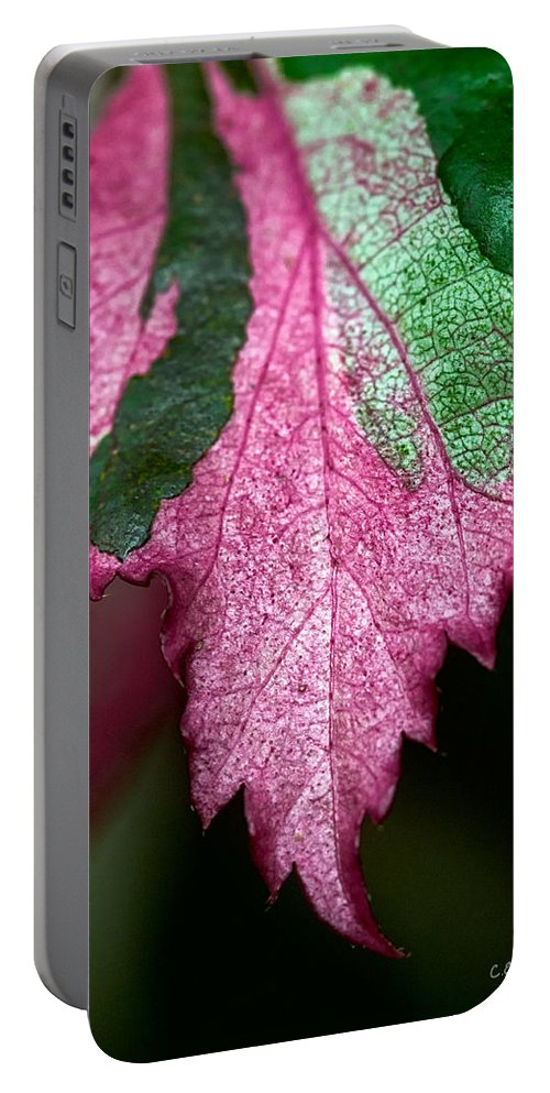 Flora Portable Battery Charger featuring the photograph Serrated by Christopher Holmes