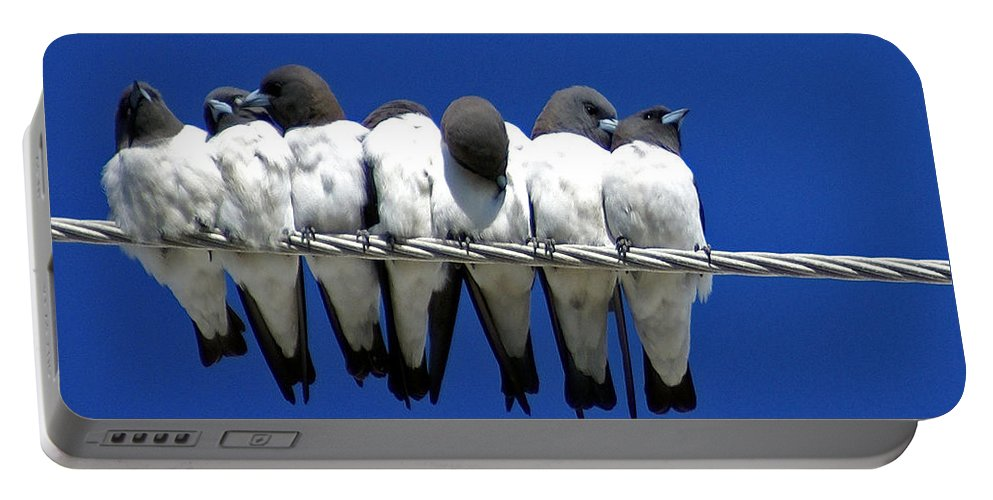 Animals Portable Battery Charger featuring the photograph Seven Swallows Sitting by Holly Kempe