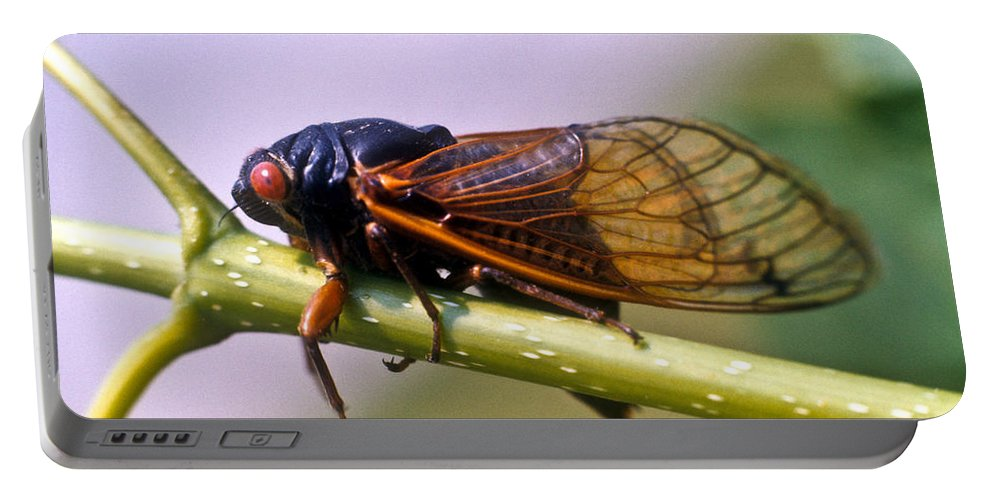 Insecta Portable Battery Charger featuring the photograph Seventeen Year Cicada by Douglas Barnett