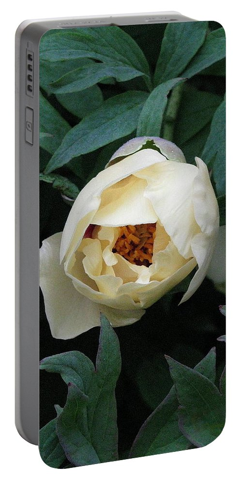 Flowers Portable Battery Charger featuring the photograph Sexy Peony by Deborah Crew-Johnson