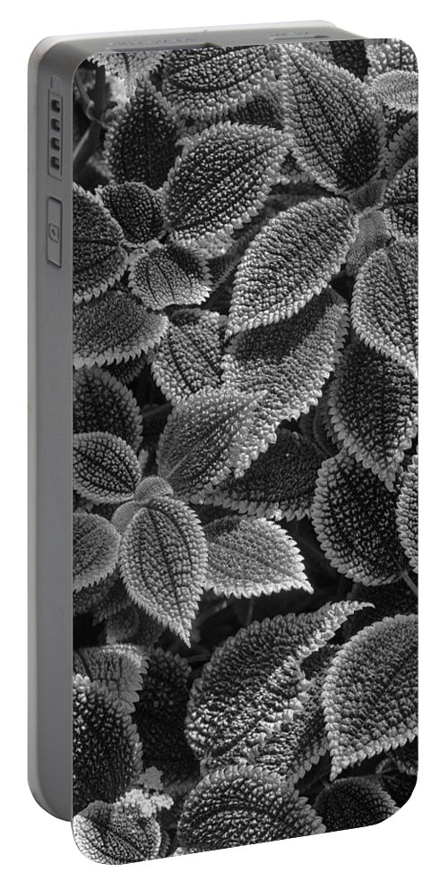 Black And White B&w Plants Botanical Gardens Atlanta State Flowers Landscape Portable Battery Charger featuring the photograph Shades Of Grey by Scott Rogers