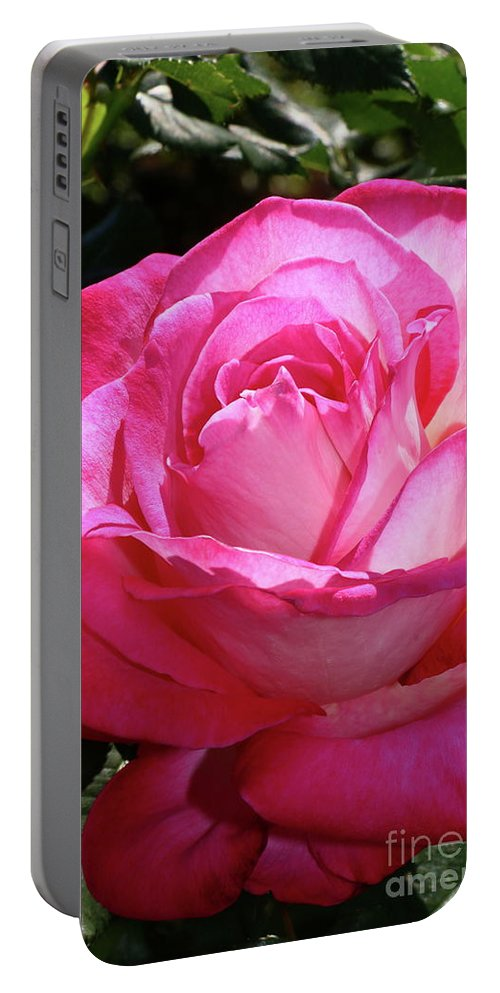 Flower Portable Battery Charger featuring the photograph Shades Of Pink by Christiane Schulze Art And Photography