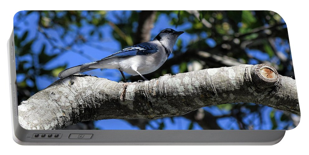 Blue Jay Portable Battery Charger featuring the photograph Shadowy Blue Jay by William Tasker