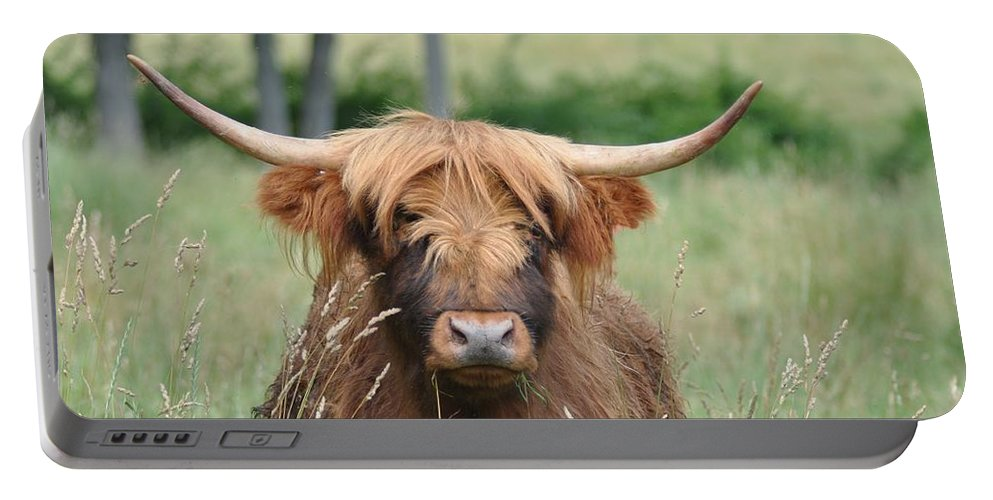 Cow Portable Battery Charger featuring the photograph Shaggy by Bill Cannon