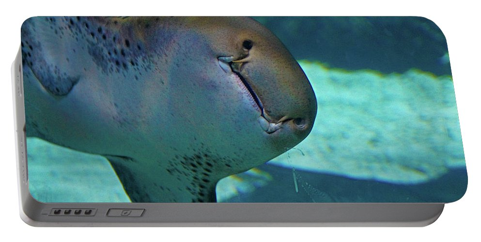Shark Portable Battery Charger featuring the photograph Shark View by Darryl Treon