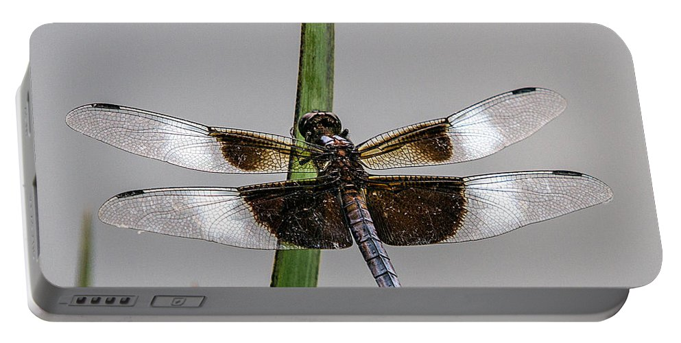 Dragonfly Portable Battery Charger featuring the photograph Sharp Focus Dragonfly by John Haldane