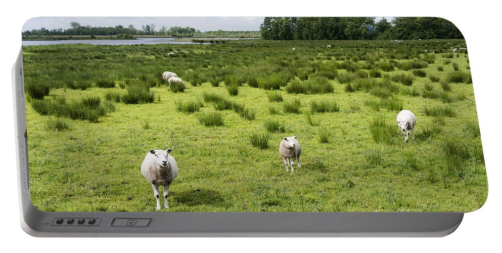 Grass Portable Battery Charger featuring the photograph Sheep Animals by Compuinfoto