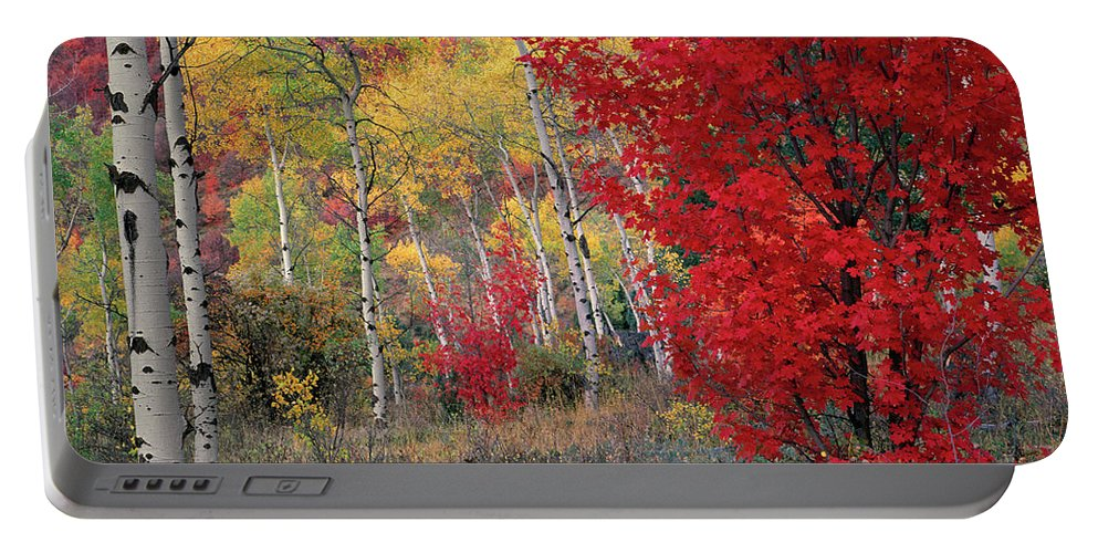 Autumn Portable Battery Charger featuring the photograph Sheep Canyon In Autumn by Leland D Howard
